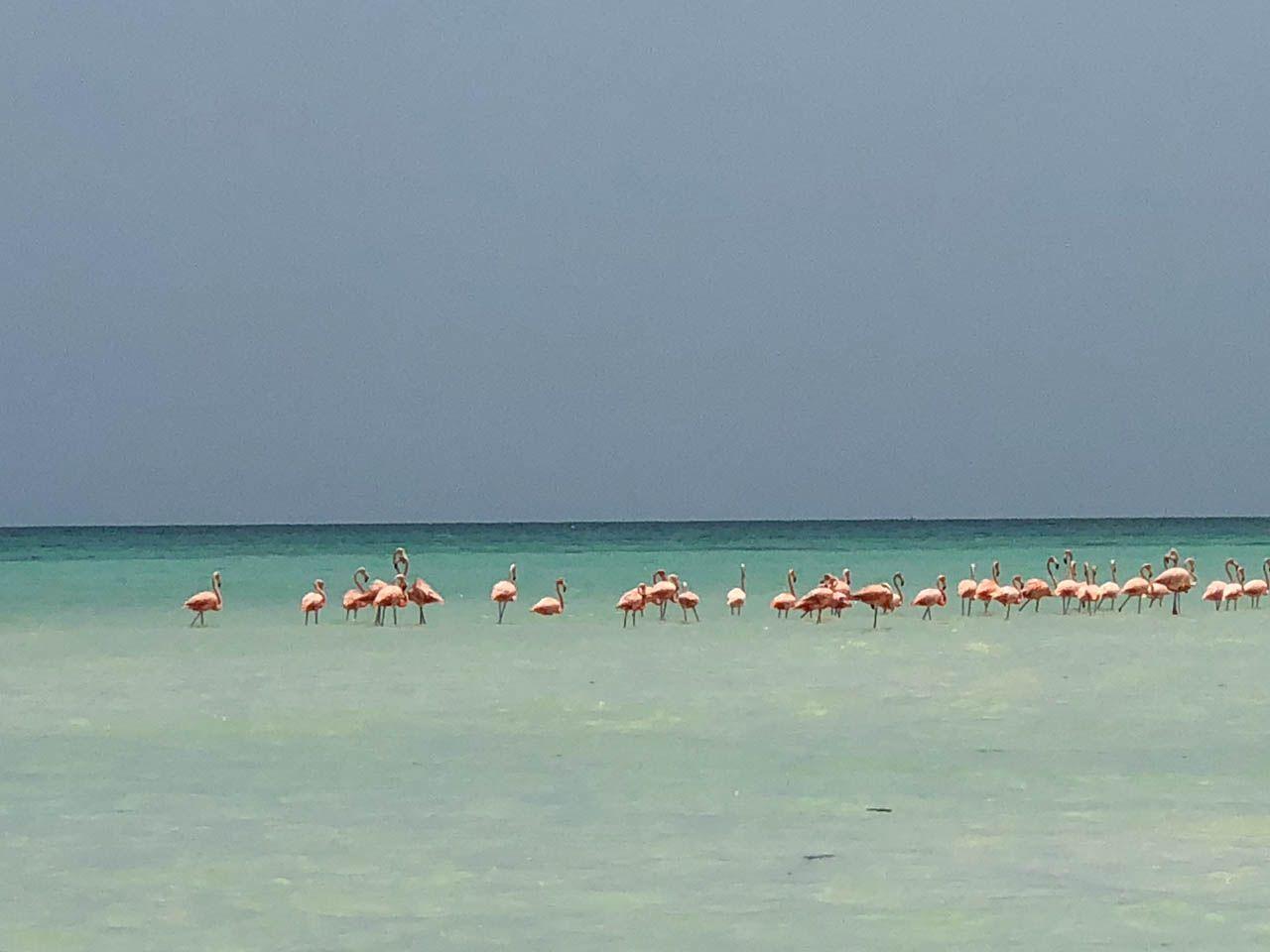 Flamingos in Isla Holbox.