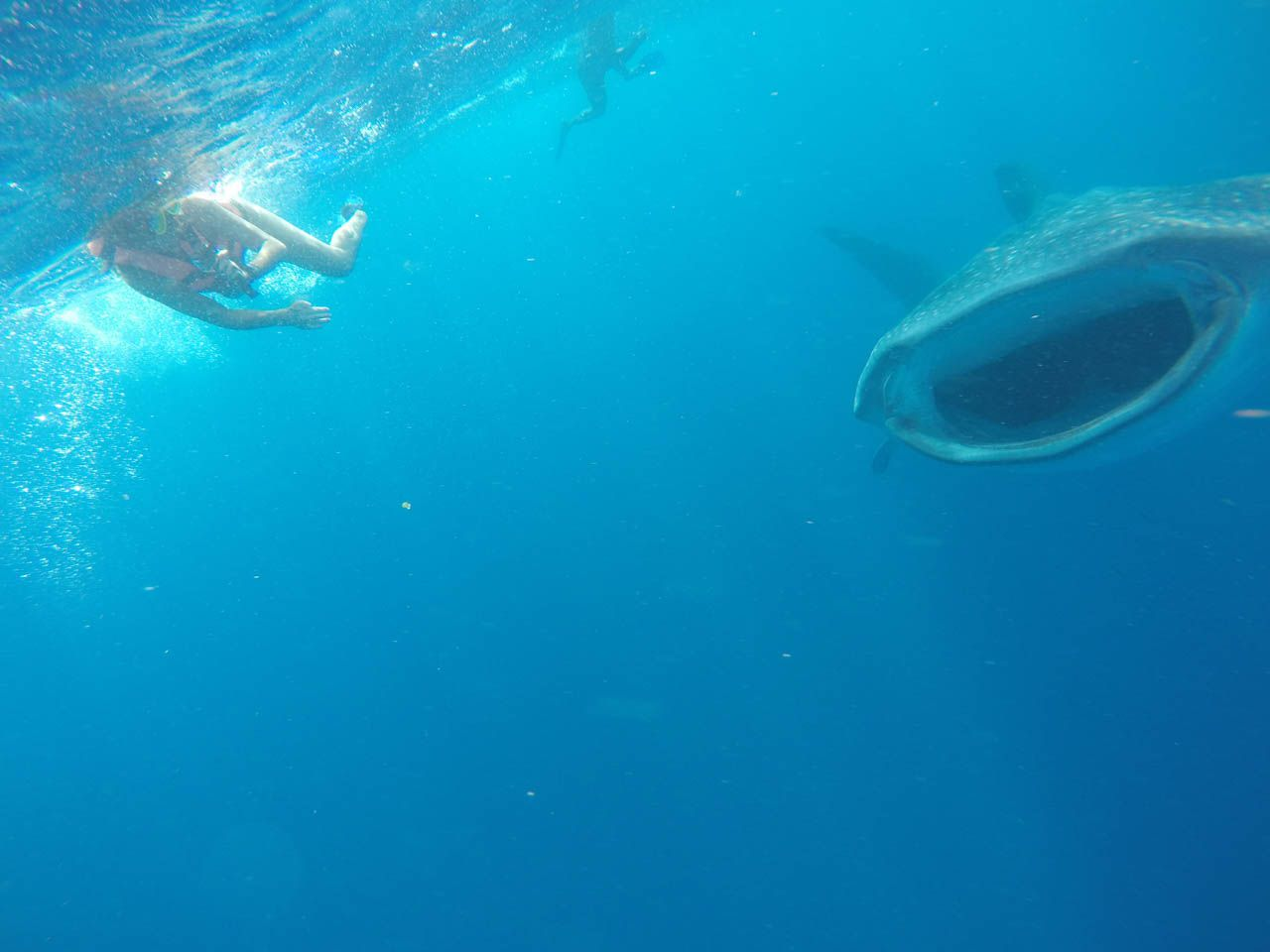 Swimming with whale sharks in Isla Holbox, Mexico.